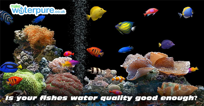 Using distilled water in the aquarium for Distilled water for fish